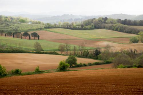 Siena Countryside - Campagna senese