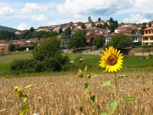Field in Casentino - Campo in Casentino