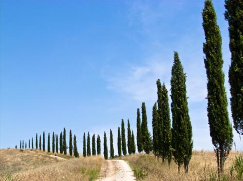 Tuscan Road - Strada Toscana