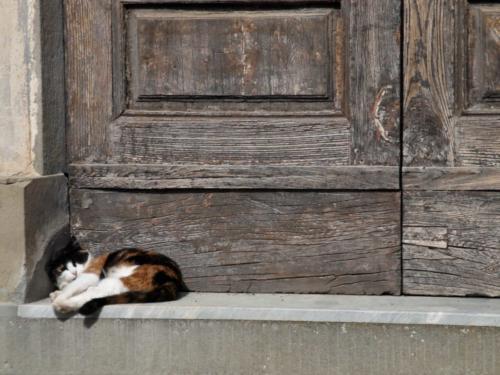 Tuscan Cat - Gatto toscano