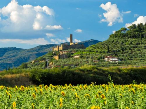 Montecchio with Sunflowers - Montecchio e i girasoli