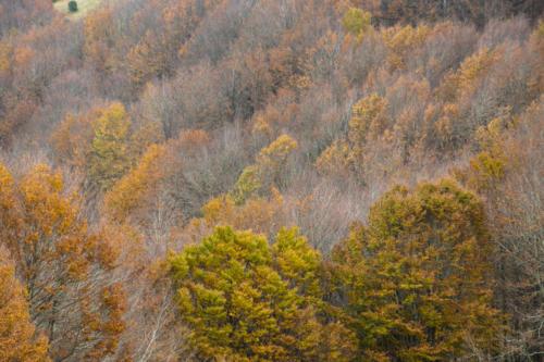 Autumn Trees - Alberi d'autunno