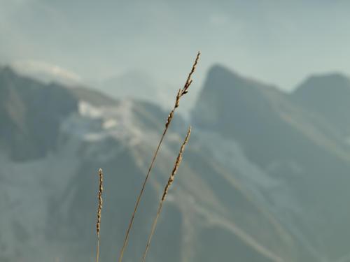 The Grass and the Quarry - Il filo d'erba e la cava