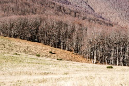 Meadows and Forest - Prati e foresta