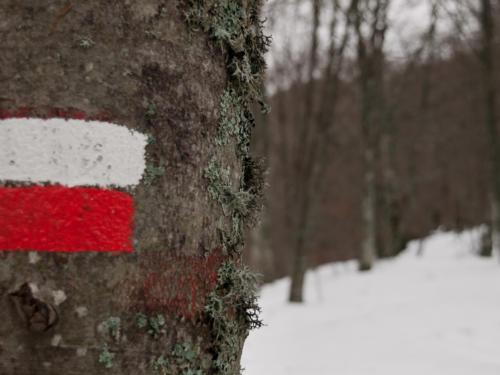 Marked Trail - Sentiero segnato